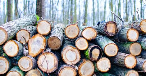 25.6.18 New report shows timber frame market set for impressive growthNews Blog